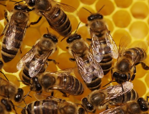 Beware This Danger to Bees and Your Brain